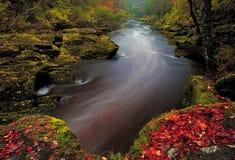 De glorie van de herfst Royalty-vrije Stock Foto's