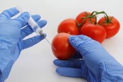 De GMO-Specialist spuit vloeistof van een spuit in een rode tomaat in stock fotografie