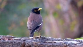 De god hield van vogels en vond bomen, mens van gehouden uit vogels en vond kooien uit Royalty-vrije Stock Afbeeldingen