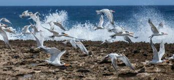 De golven en de vogels van Playacanoa stock afbeeldingen