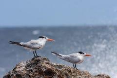 De golven en de vogels van Playacanoa royalty-vrije stock afbeelding