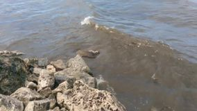 De golven slaan tegen stenen in winderig weer stock video