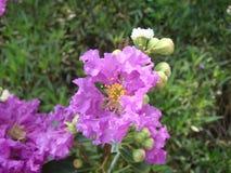 De golvende bloemblaadjes vertellen de onzekerheden van aard Royalty-vrije Stock Foto