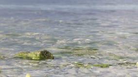 De golvenonderbreking op het strand stock footage