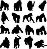 De gorilla's zijn de grootste primaten Royalty-vrije Stock Foto's