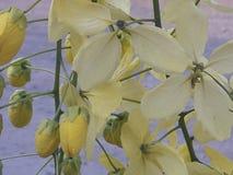 De gouden bloem van bloeiapril stock fotografie
