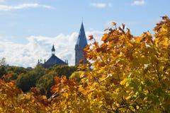 De gouden esdoorn verlaat op de achtergrond de toren van Alexander Lutheran Church Estland Royalty-vrije Stock Afbeeldingen