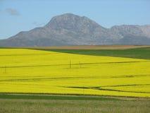 De gouden gebieden van overbergcanola Royalty-vrije Stock Foto's