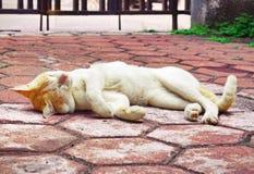 De gouden-geleide luie tijd van de kat Stock Foto