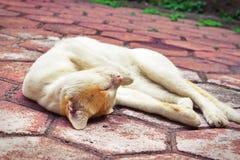 De gouden-geleide luie tijd van de kat Stock Foto's