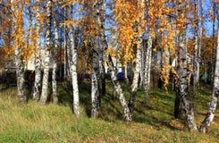 De gouden Herfst Stock Foto's