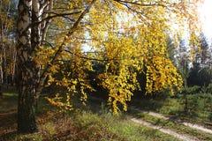 De gouden Herfst Royalty-vrije Stock Afbeelding