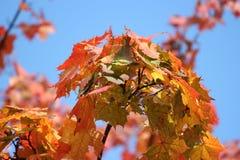 De gouden Herfst Stock Foto