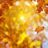 De gouden Herfst Stock Afbeeldingen