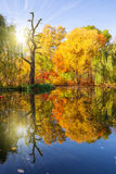 De gouden Herfst Royalty-vrije Stock Fotografie