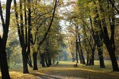 De gouden Herfst Stock Afbeelding