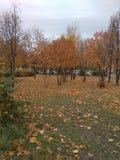 De gouden herfst, gele bomen en gevallen bladeren royalty-vrije stock fotografie