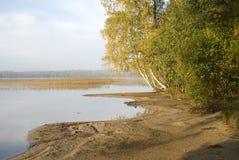 De gouden Herfst, (goud op hout) Stock Afbeeldingen