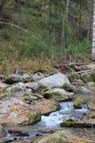 De gouden herfst in het Altai-gebied in Rusland Mooi landschap - weg in de herfstbos stock foto's