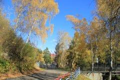 De gouden herfst in het Altai-gebied in Rusland Mooi landschap - weg in de herfstbos stock afbeeldingen