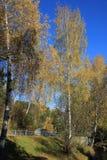 De gouden herfst in het Altai-gebied in Rusland Mooi landschap - weg in de herfstbos royalty-vrije stock foto's