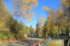 De gouden herfst in het Altai-gebied in Rusland Mooi landschap - weg in de herfstbos stock afbeelding