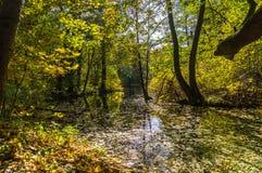 De gouden herfst in het bos Royalty-vrije Stock Foto's