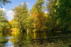De gouden herfst in het bos Royalty-vrije Stock Foto