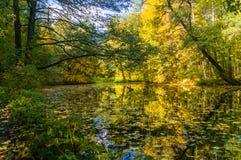 De gouden herfst in het bos Stock Foto's