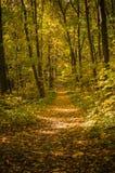 De gouden herfst in het bos Stock Afbeelding