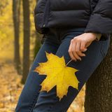 De gouden herfst in het esdoornbos royalty-vrije stock foto