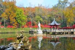 de gouden herfst in het nanjing Royalty-vrije Stock Afbeelding