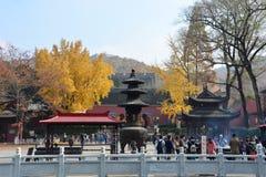de gouden herfst in het nanjing Stock Afbeeldingen