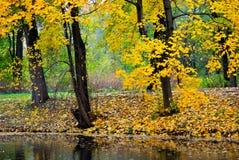 De gouden herfst in het park stock foto