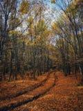 De gouden Herfst is nog hier royalty-vrije stock afbeelding