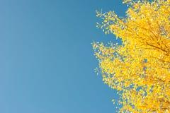 De gouden Herfst Op de achtergrond van blauwe hemel Royalty-vrije Stock Foto's