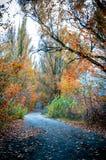 De gouden Herfst op de weg Stock Afbeelding