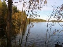 De gouden herfst op een bosmeer royalty-vrije stock afbeelding