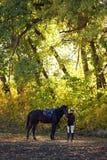 De gouden herfst in paardenlandbouwbedrijf Stock Foto