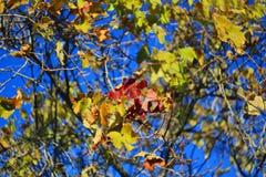De gouden herfst Sommige bomen en doorbladert stock fotografie
