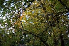De gouden herfst Sommige bomen en doorbladert Stock Afbeelding