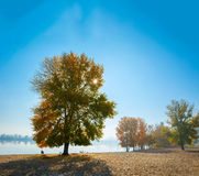 De gouden herfst Sommige bomen en doorbladert Royalty-vrije Stock Foto's