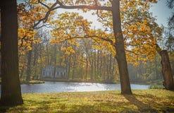 De gouden herfst Sommige bomen en doorbladert Stock Afbeeldingen