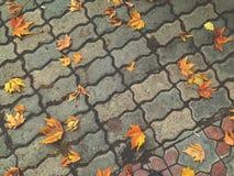 de gouden herfst in de stad, die uit kleurrijke bladeren kijken stock foto