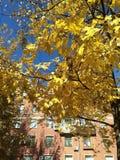 De gouden herfst in de stad in goed weer stock fotografie
