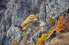De gouden herfst van het berglandschap Royalty-vrije Stock Afbeelding