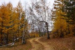 De gouden herfst, weg in bos Stock Foto's