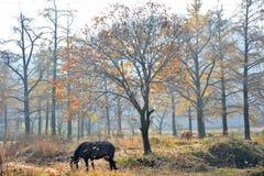 de gouden herfst in Zuid-China Royalty-vrije Stock Afbeeldingen