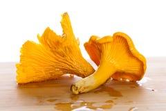 De gouden macro van de cantharelpaddestoel Stock Fotografie