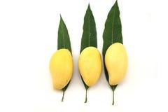 De gouden mango op Mango doorbladert op witte achtergrond Stock Foto